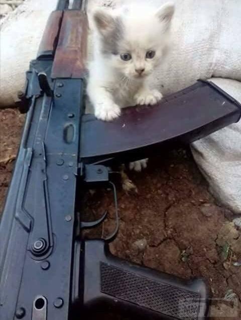 110318 - Животные на войне