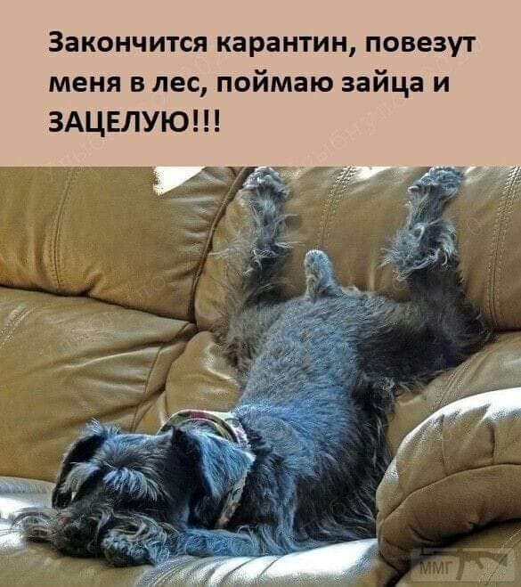 110599 - Смешные видео и фото с животными.
