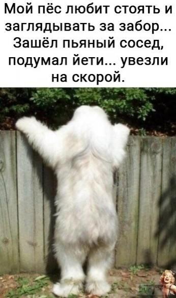 110606 - Смешные видео и фото с животными.