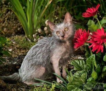110742 - Красивые животные