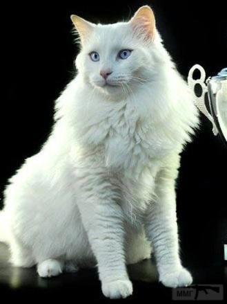 110743 - Красивые животные