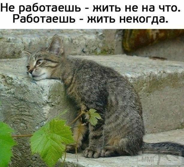 110778 - Смешные видео и фото с животными.
