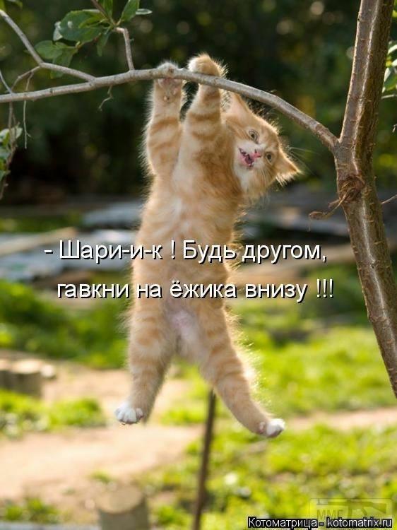 110779 - Смешные видео и фото с животными.