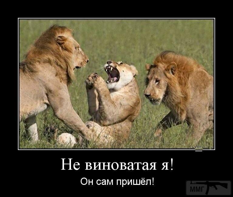 110780 - Смешные видео и фото с животными.
