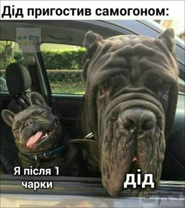110861 - Пить или не пить? - пятничная алкогольная тема )))