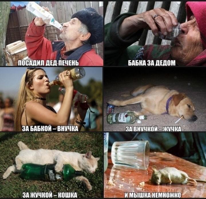 110918 - Пить или не пить? - пятничная алкогольная тема )))