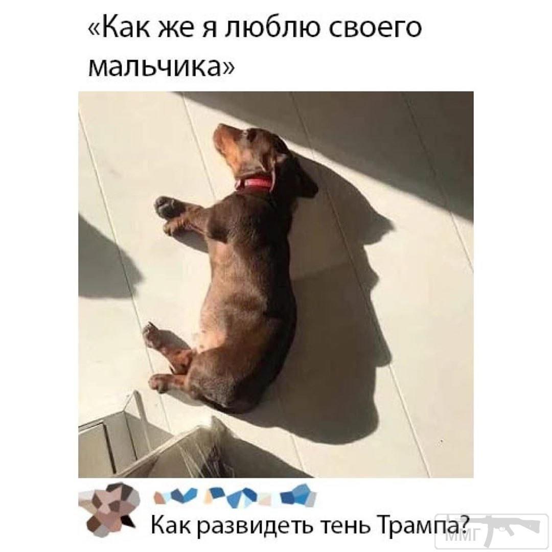 110939 - Смешные видео и фото с животными.