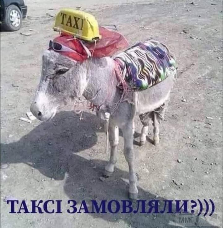 110967 - Смешные видео и фото с животными.