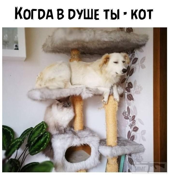 111206 - Смешные видео и фото с животными.