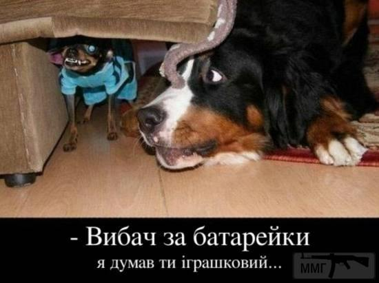 111207 - Смешные видео и фото с животными.