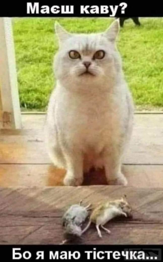 111353 - Смешные видео и фото с животными.