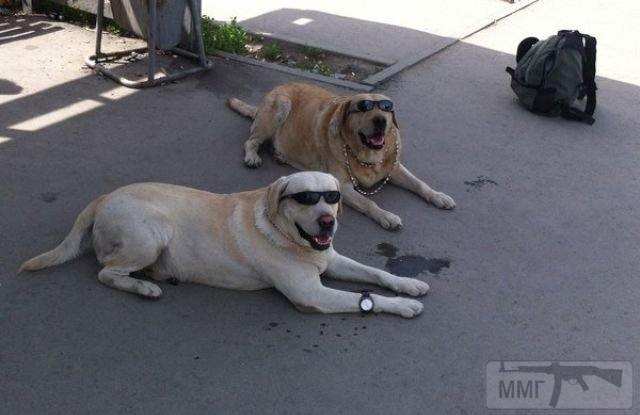 111410 - Смешные видео и фото с животными.