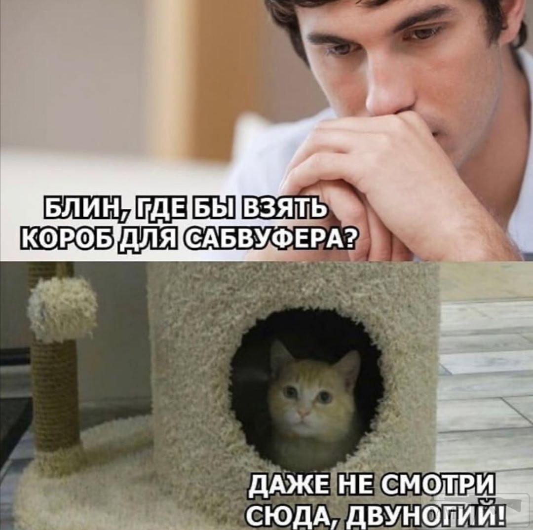 111533 - Смешные видео и фото с животными.