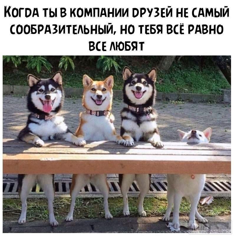 111782 - Смешные видео и фото с животными.