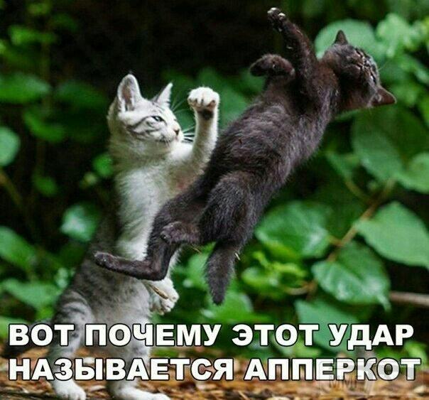 112040 - Смешные видео и фото с животными.