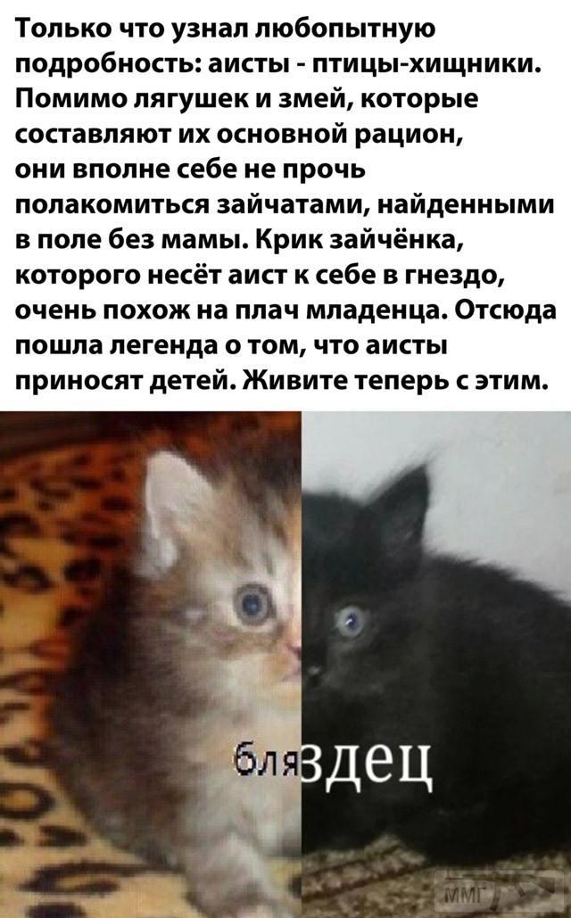 112042 - Смешные видео и фото с животными.