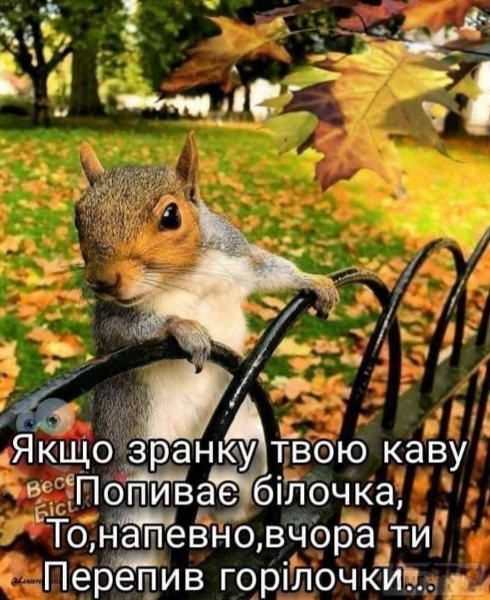 112073 - Пить или не пить? - пятничная алкогольная тема )))