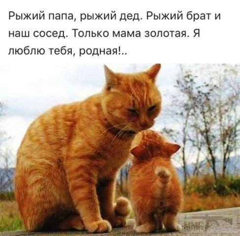 112161 - Смешные видео и фото с животными.