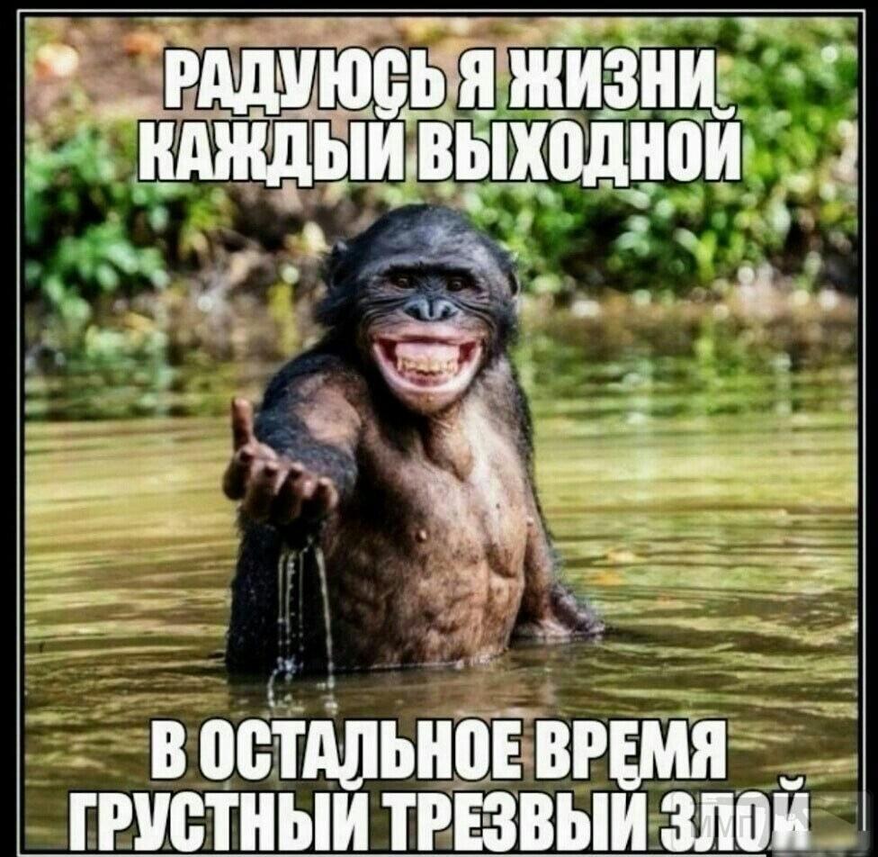 113106 - Пить или не пить? - пятничная алкогольная тема )))