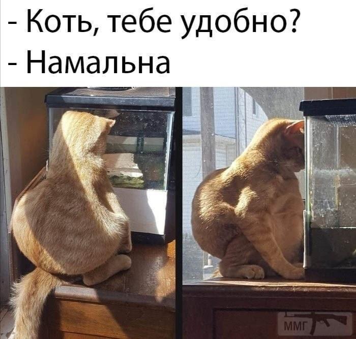 113188 - Смешные видео и фото с животными.
