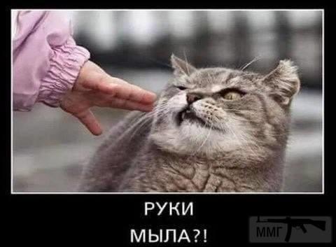 113512 - Смешные видео и фото с животными.