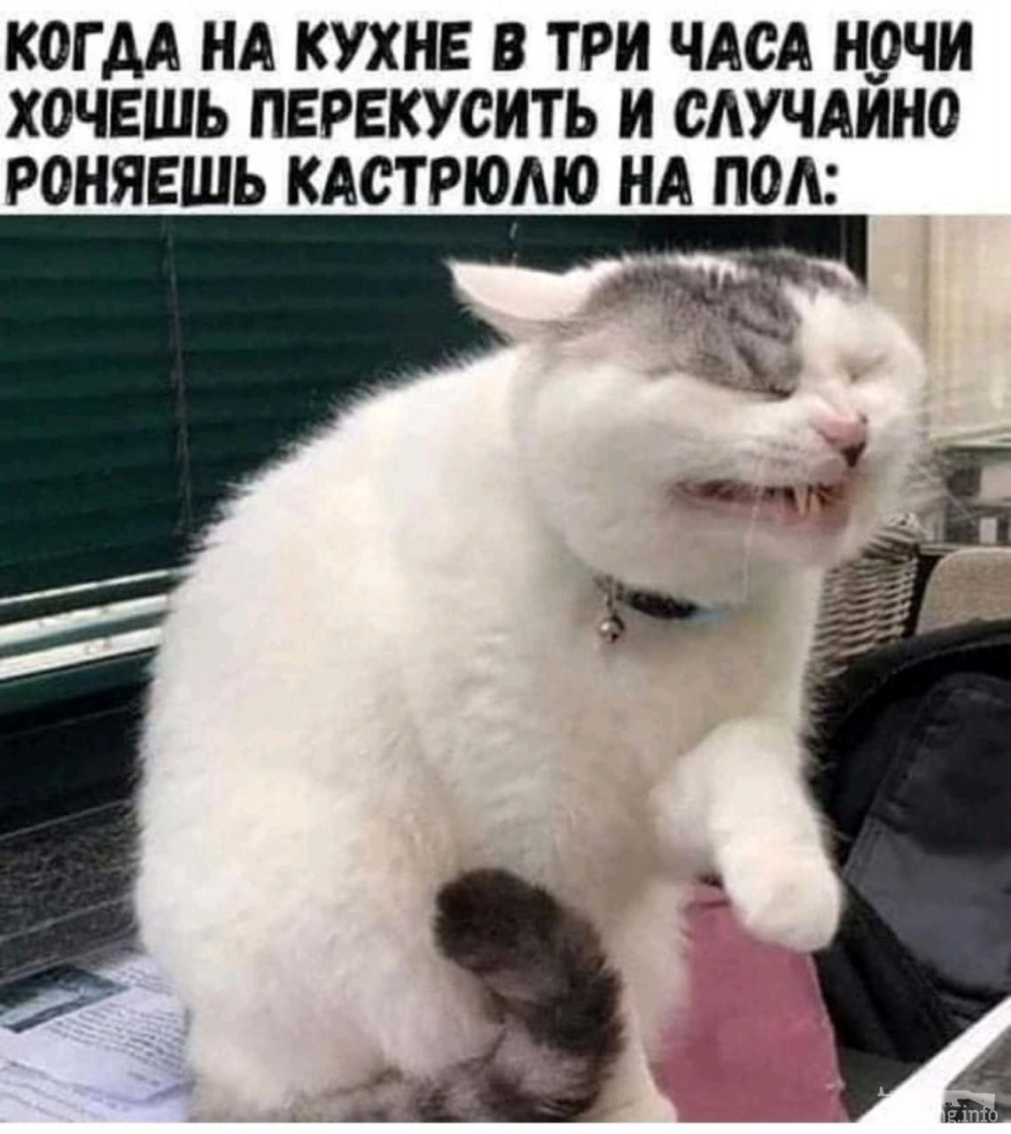 113747 - Смешные видео и фото с животными.