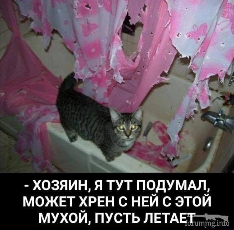 113916 - Смешные видео и фото с животными.