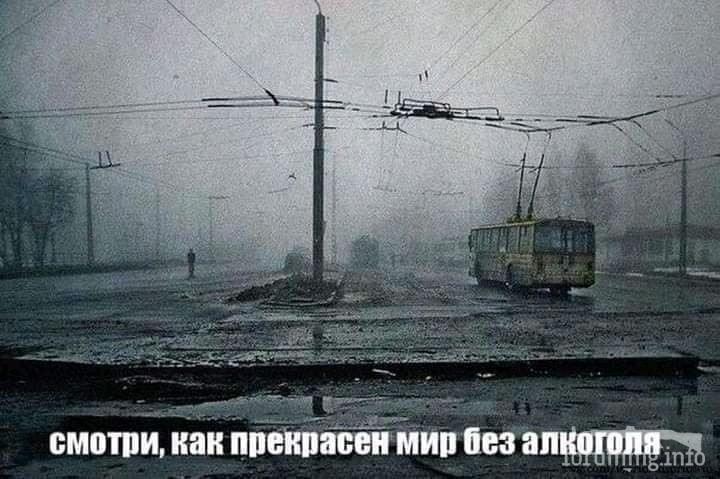114129 - Пить или не пить? - пятничная алкогольная тема )))