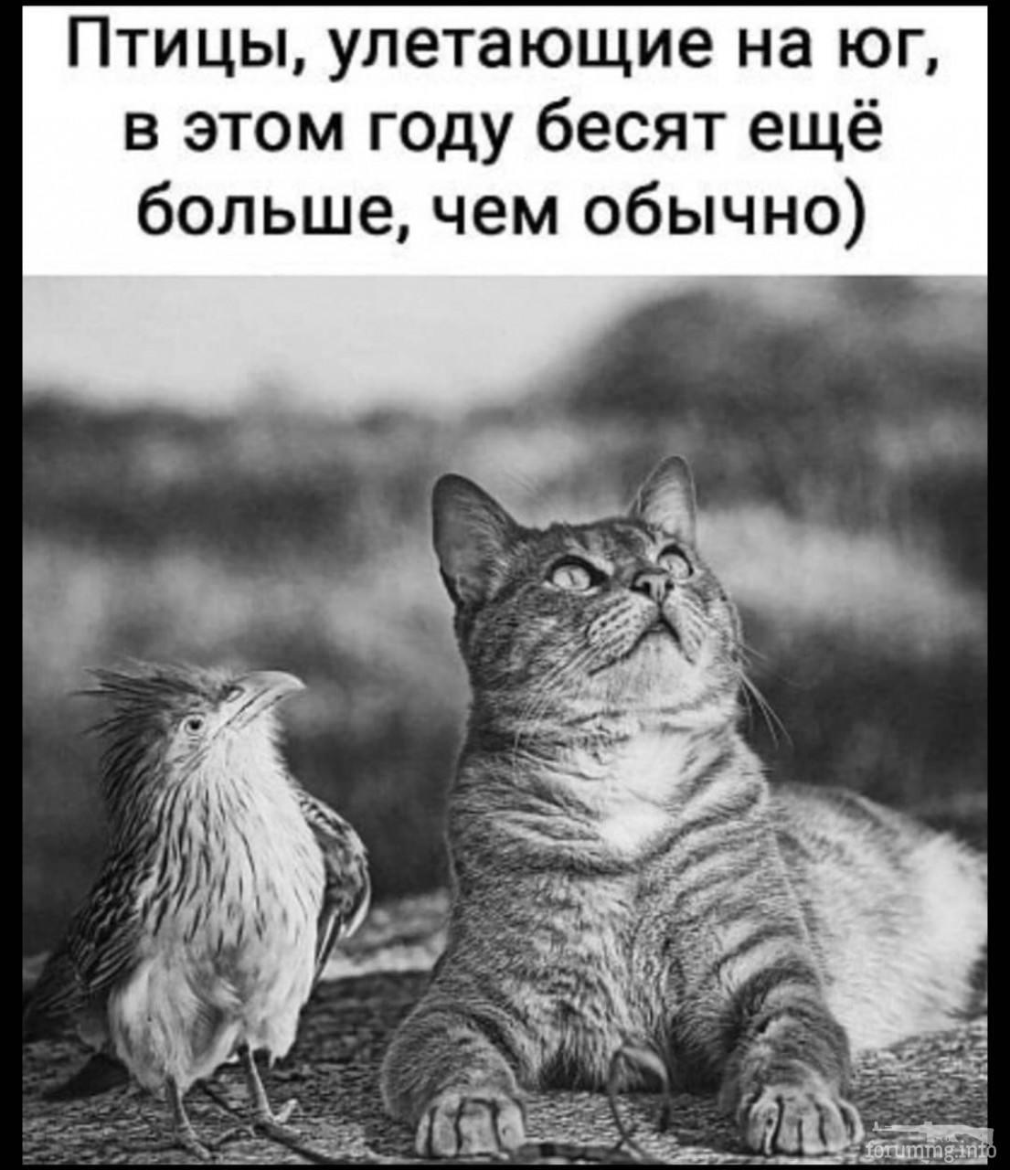 114479 - Смешные видео и фото с животными.