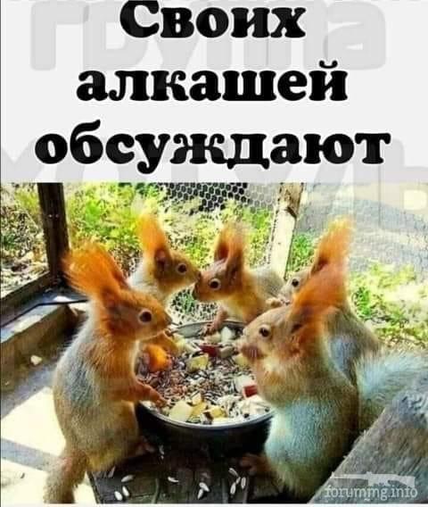 114745 - Пить или не пить? - пятничная алкогольная тема )))