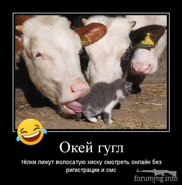 114800 - Смешные видео и фото с животными.