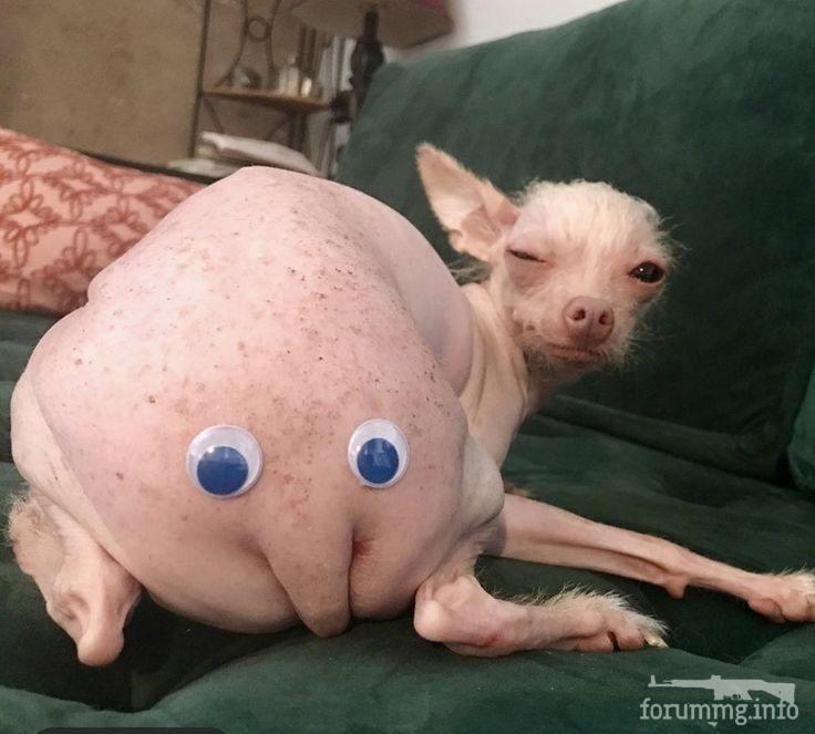 114826 - Смешные видео и фото с животными.