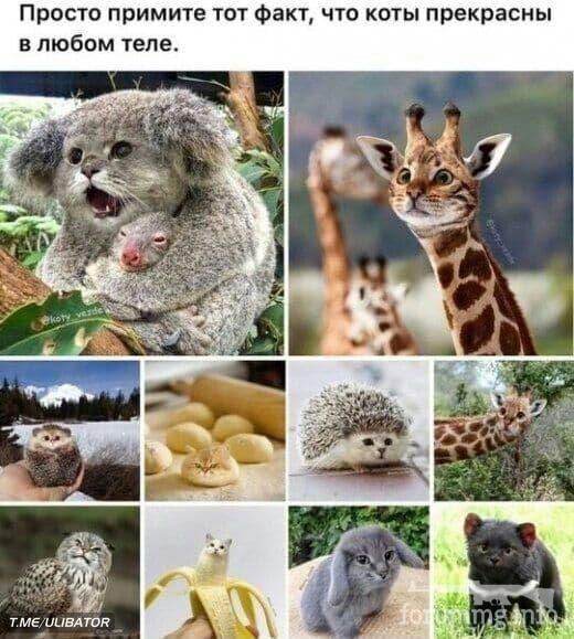 115163 - Смешные видео и фото с животными.