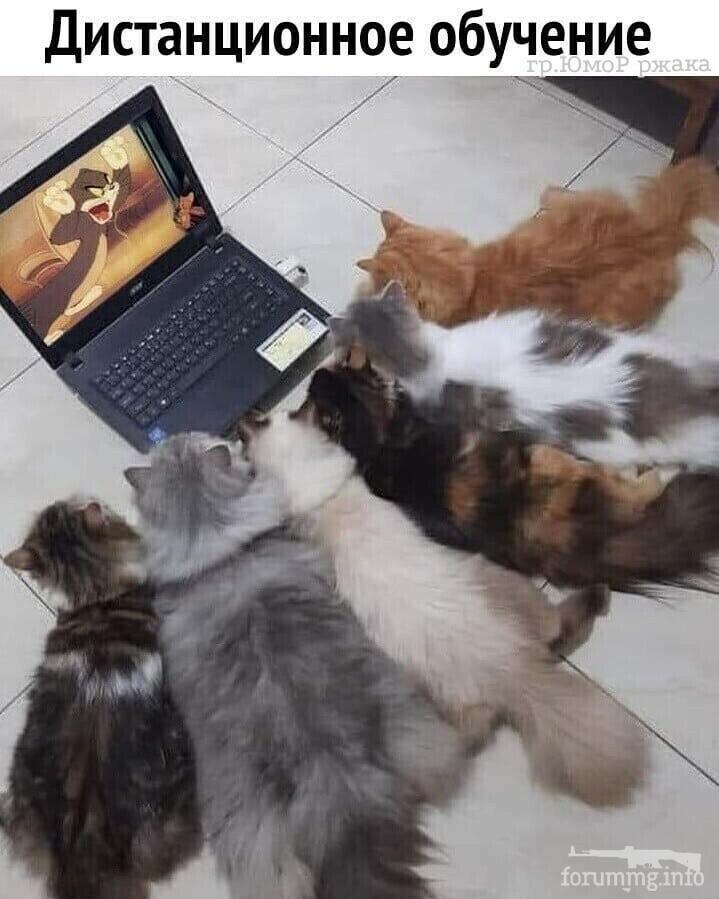 115261 - Смешные видео и фото с животными.