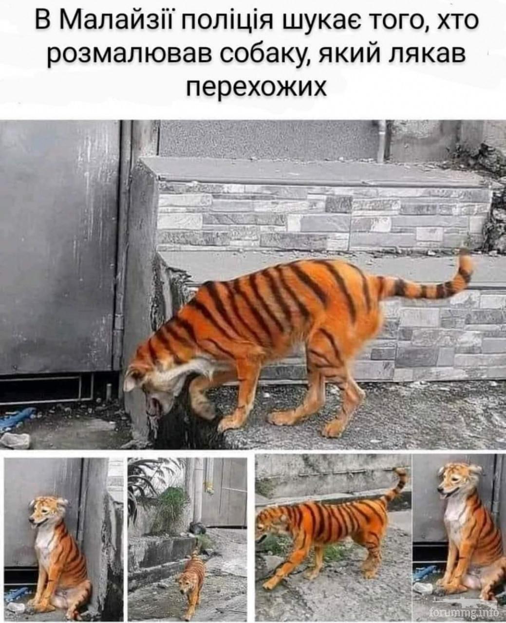 115636 - Смешные видео и фото с животными.
