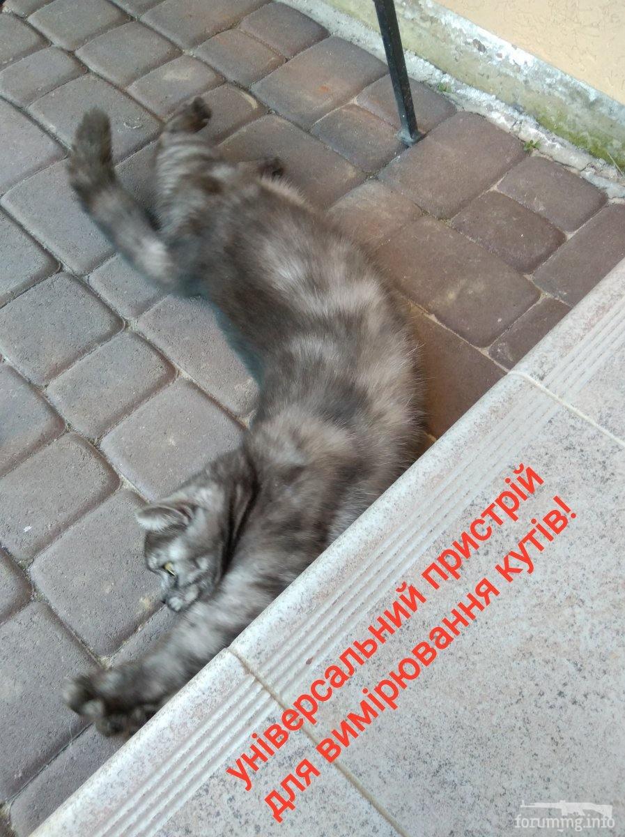 115738 - Смешные видео и фото с животными.