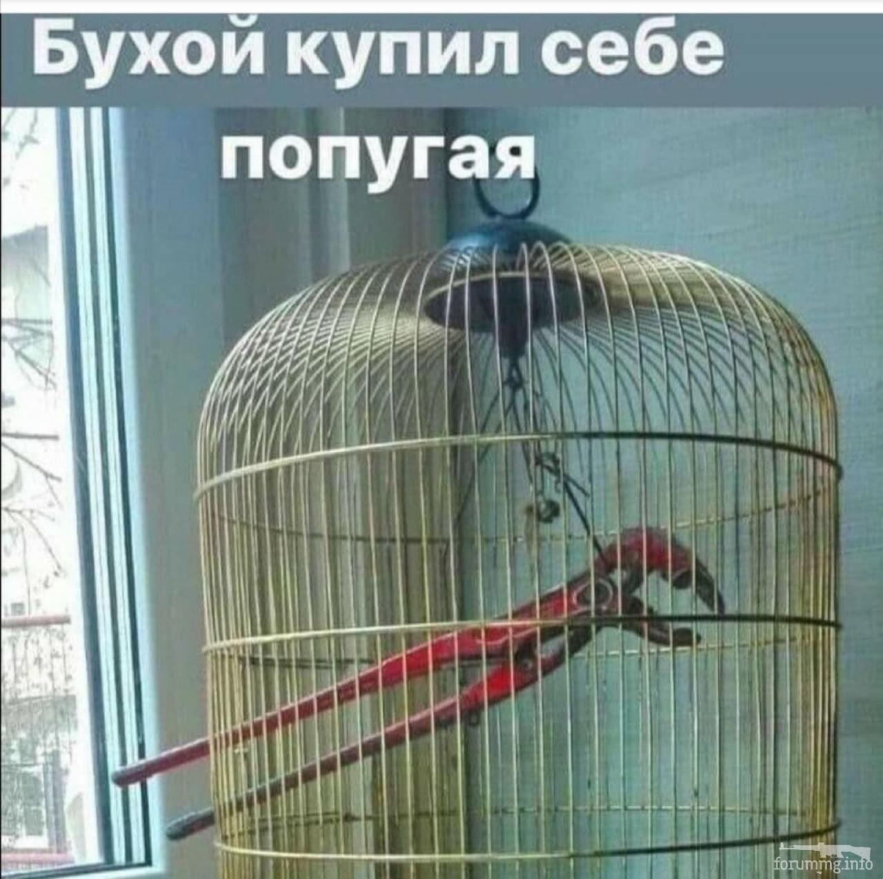 115851 - Пить или не пить? - пятничная алкогольная тема )))