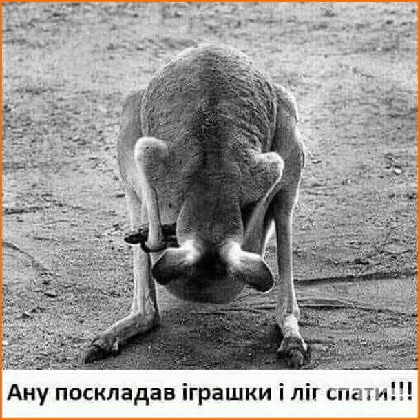 116204 - Смешные видео и фото с животными.