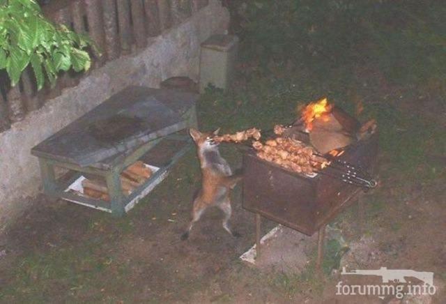 116402 - Закуски на огне (мангал, барбекю и т.д.) и кулинария вообще. Советы и рецепты.