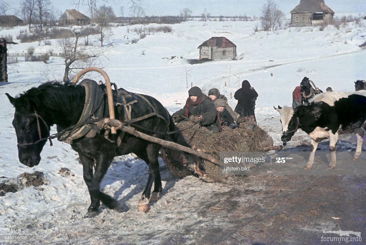 116730 - Военное фото 1941-1945 г.г. Восточный фронт.