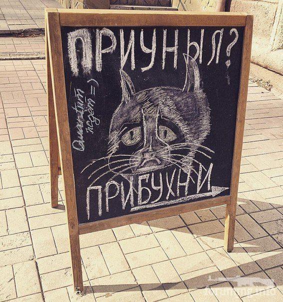 117364 - Пить или не пить? - пятничная алкогольная тема )))