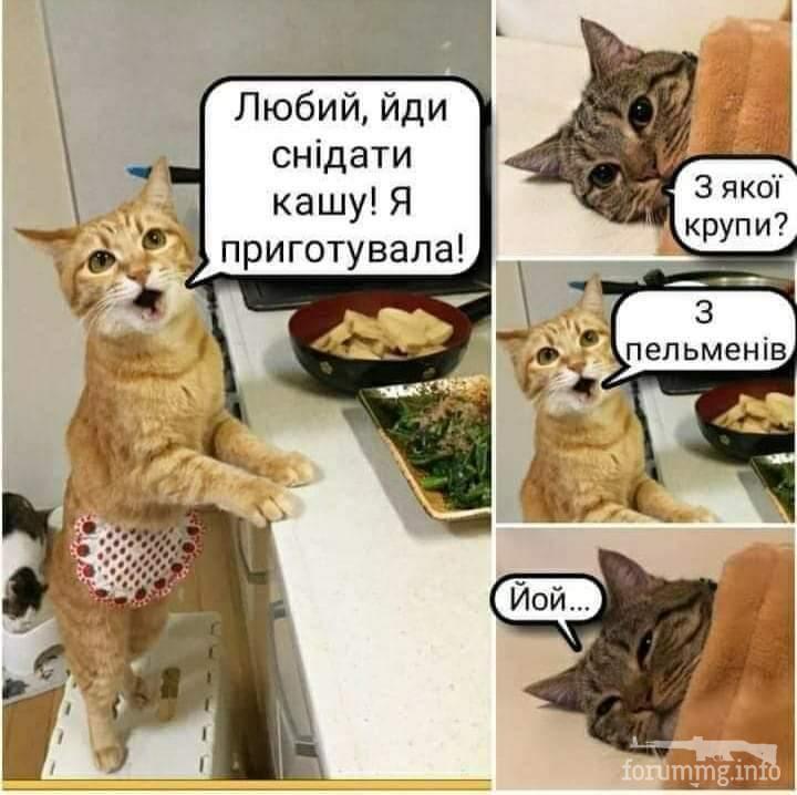 117724 - Смешные видео и фото с животными.