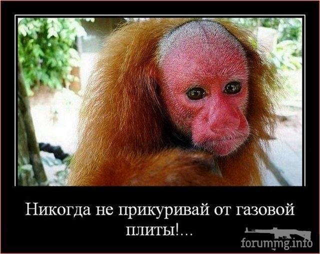 117920 - Смешные видео и фото с животными.
