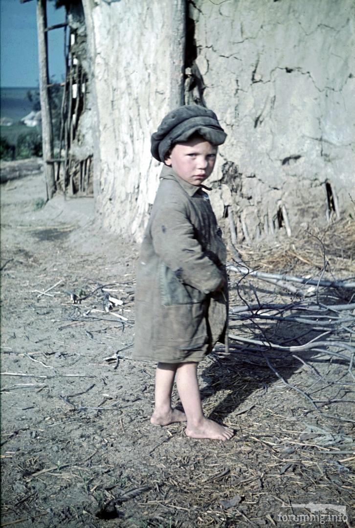 118184 - Военное фото 1941-1945 г.г. Восточный фронт.
