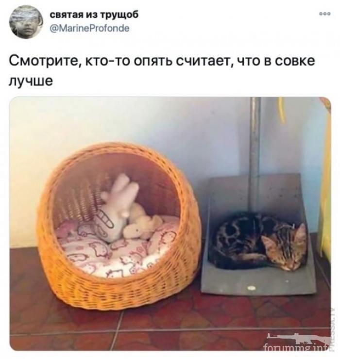 118296 - Смешные видео и фото с животными.