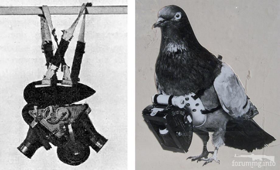 118406 - Животные на войне