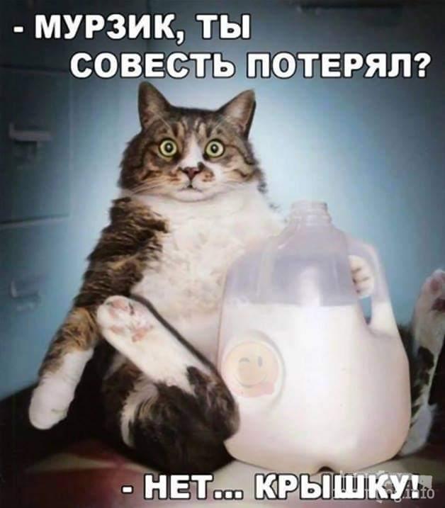 118738 - Смешные видео и фото с животными.