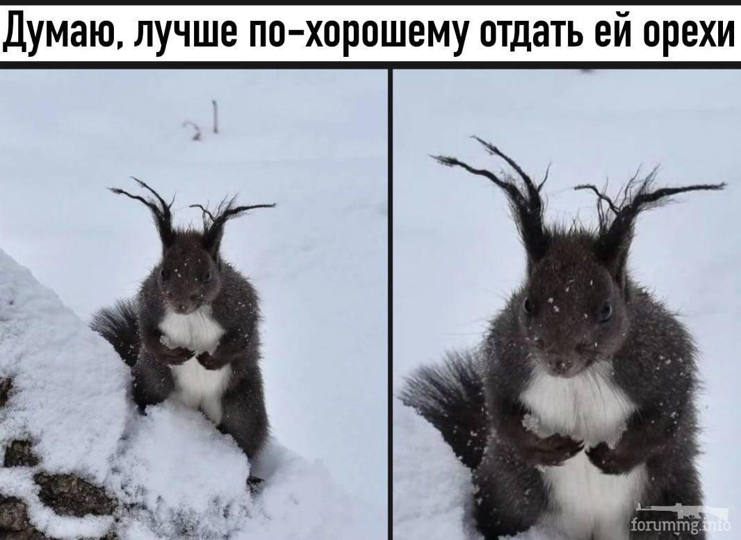 118779 - Смешные видео и фото с животными.