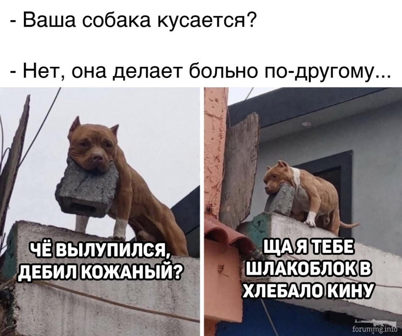 118850 - Смешные видео и фото с животными.