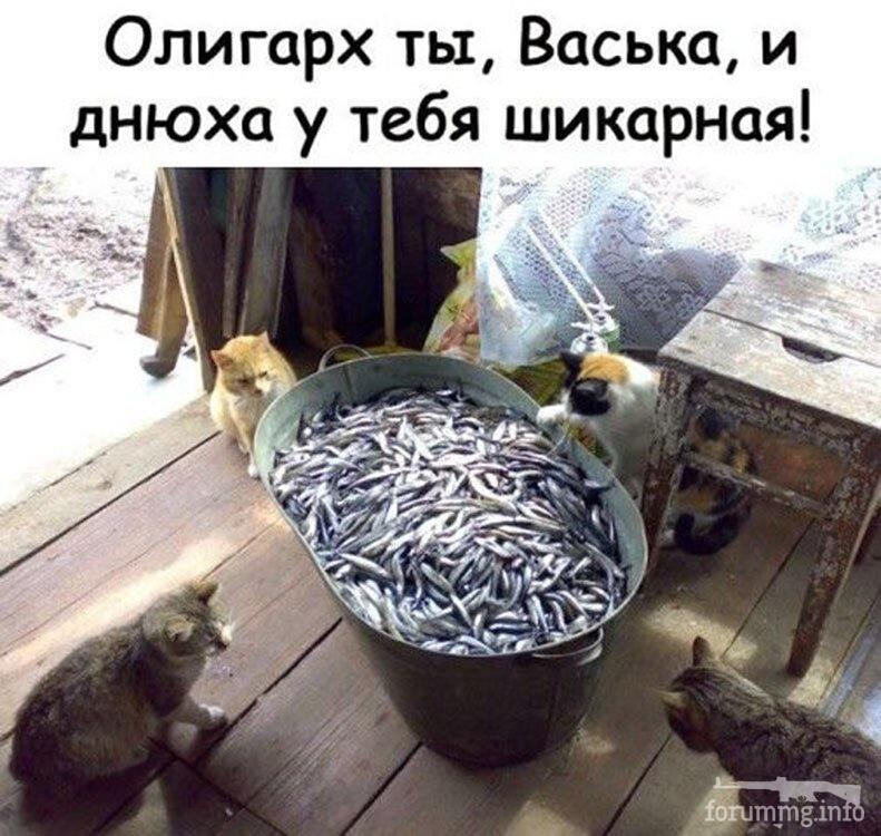 119108 - Смешные видео и фото с животными.